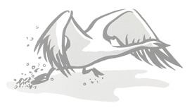 CS_Swan-1